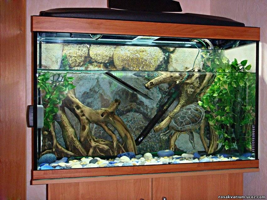 Красноухая черепаха в домашних условиях аквариумы