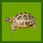 Изготовление террариума для сухопутной черепахи